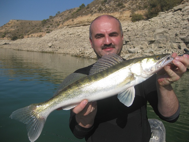 ZANDER-PIKE PERCH