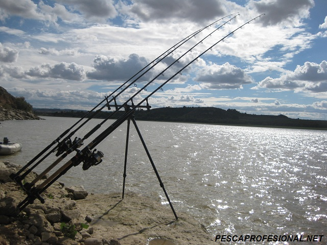 CARPFISHING CARPFISHING EN EMBALSE DE MEQUINENZA