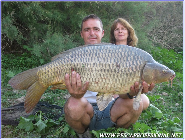 GUIAS DE PESCA DE LA CARPA 5 CARPFISHING EN EMBALSE DE MEQUINENZA