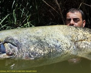 FISHING FOR CATFISH EN MEQUINENZA