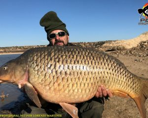 Fishing guide catfish and big carp in Mequinenza RIO EBRO