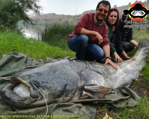 GUIDED FISHING CATFISH IN RIO EBRO